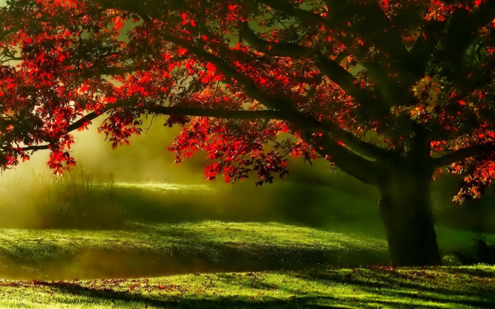 landscape-tree-nature-forest-grass-branch-blossom-plant-fog-meadow-sunlight-morning-leaf-flower-shade-green-scenic-autumn-botany-season-outdoors-shadows-shrub-mists-woody-plant-836379